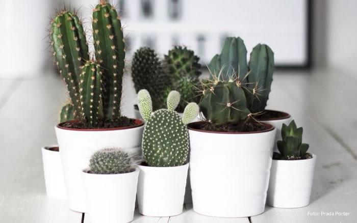 5 plantas para dentro de casa e seus benefícios