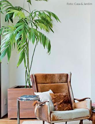 Planta Camed�rea Elegante: �tima op��o para cultivar dentro de casa